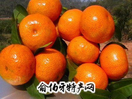 崩坑沙糖橘