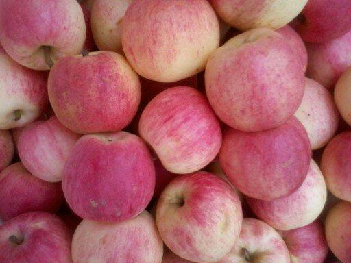 昭通早熟苹果