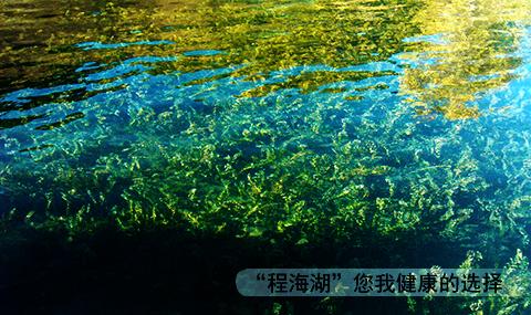 程海湖螺旋藻