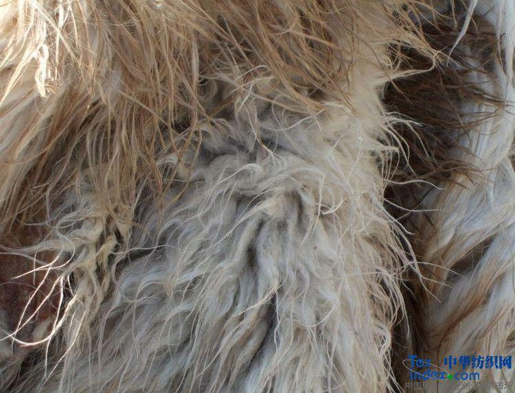 山羊绒 羊毛 羊皮