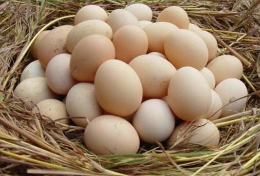 劳山土鸡蛋
