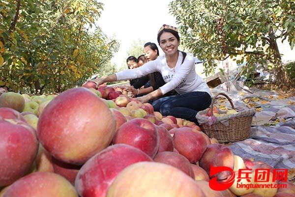 二二三团苹果