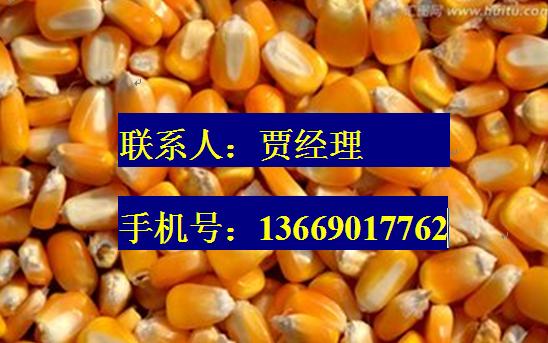 贾经理求购玉米大豆小麦棉粕菜粕麸皮油糠花生绿豆