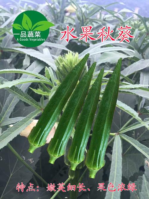 日本绿霸水果秋葵种子