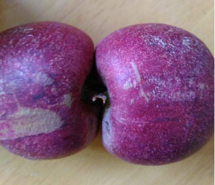 黑桃新品种