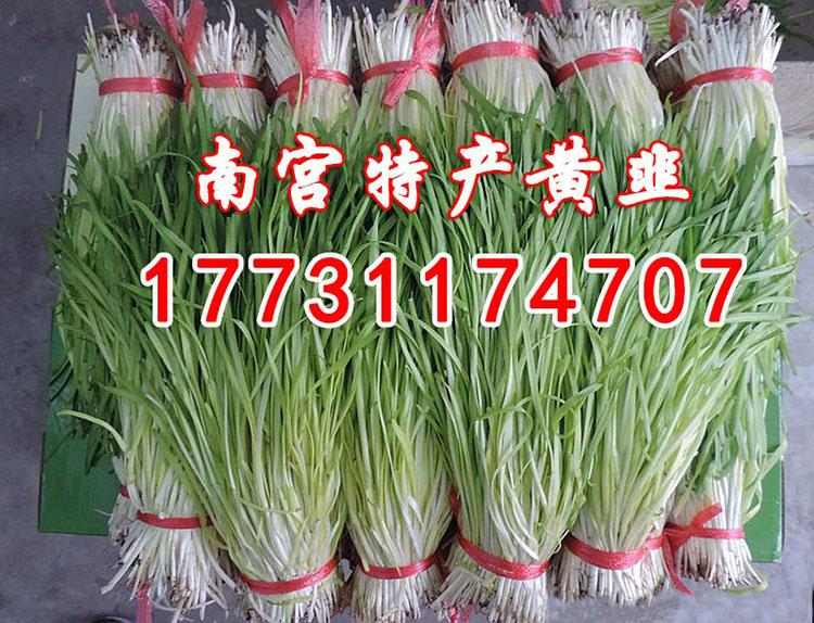 黄韭礼盒   黄韭盆景